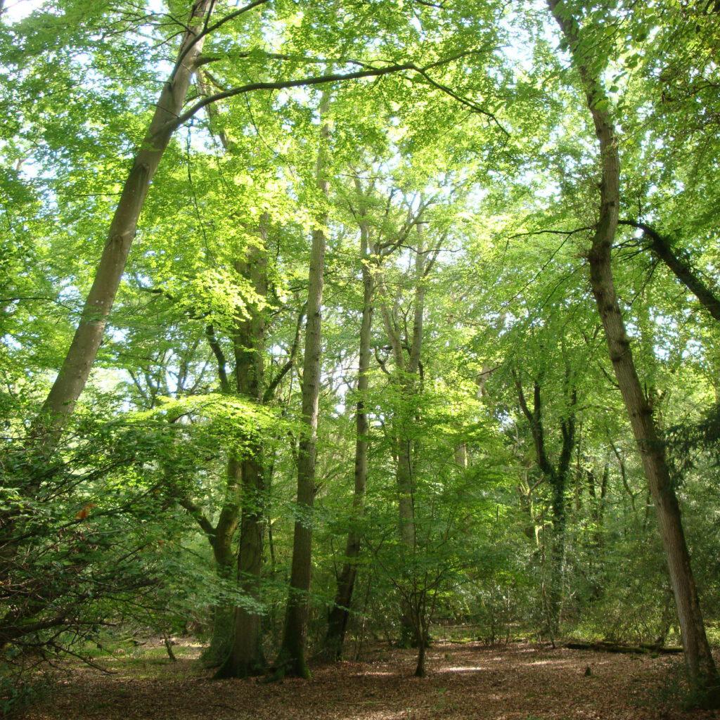Foto von Wald mit schönen Laubbäumen an sonnigem Tag